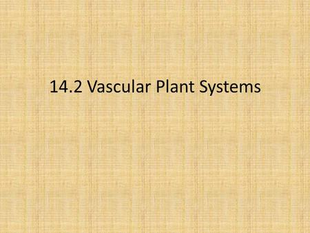 14.2 Vascular Plant Systems