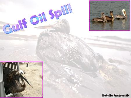 Natalie Santore 5H. National Wildlife Federation-Ranger Rick How is the leak being cleaned up? Why couldn't the oil leak be stopped quickly? What happened?