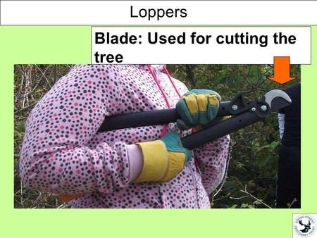 Blade: Used for cutting the tree Loppers. Handle: Used for opening the loppers so you can put them around the tree you want to cut Loppers.