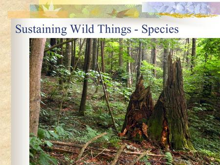 Sustaining Wild Things - <strong>Species</strong>