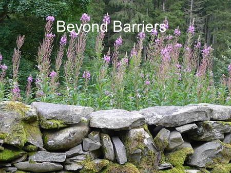 Beyond Barriers. Developing a palliative care approach for people with the later stages of dementia Jenny Henderson.