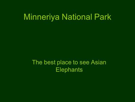 Minneriya National Park The best place to see Asian Elephants.