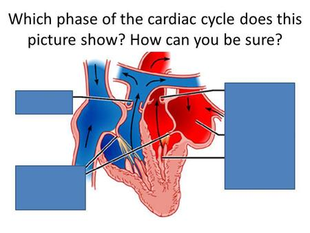 Which phase of the cardiac cycle does this picture show