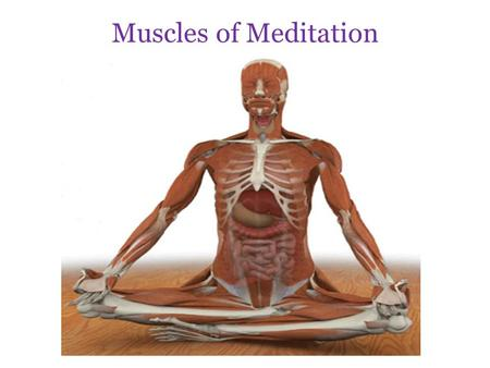 Muscles of Meditation.