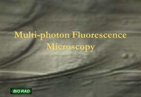 Multi-photon Fluorescence Microscopy. Topics Basic Principles of multi-photon imaging Laser systems Multi-photon instrumentation Fluorescence probes Applications.