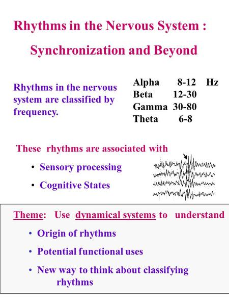 Rhythms in the Nervous System : Synchronization and Beyond Rhythms in the nervous system are classified by frequency. Alpha 8-12 Hz Beta 12-30 Gamma 30-80.