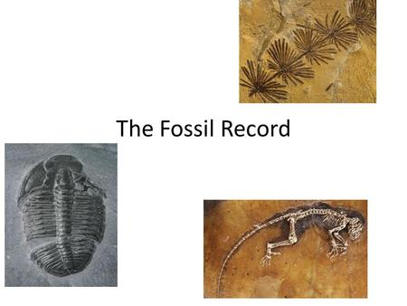 The Fossil Record.