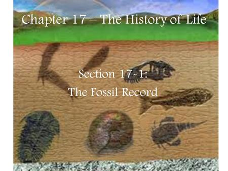 Chapter 17 – The History of Life