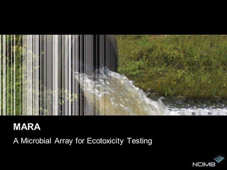 MARA A Microbial Array for Ecotoxicity Testing. Contents This presentation covers 3 areas: The drivers behind ecotoxicity testing Perspective of tests.