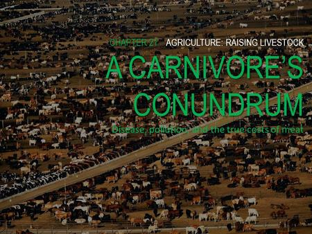 CHAPTER 21AGRICULTURE: RAISING LIVESTOCK A CARNIVORES CONUNDRUM CHAPTER 21 AGRICULTURE: RAISING LIVESTOCK A CARNIVORES CONUNDRUM Disease, pollution, and.