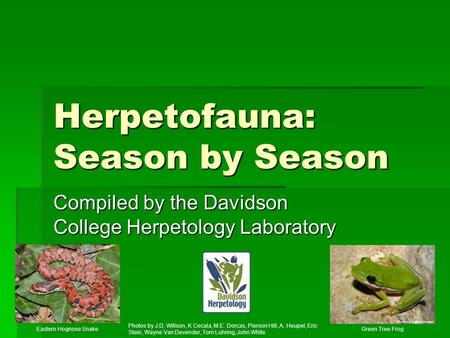 Herpetofauna: Season by Season