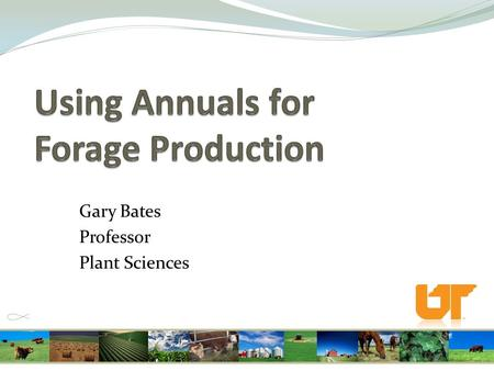 Gary Bates Professor Plant Sciences. Goals for forage program Graze as much as possible Spend as little money as possible.