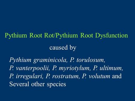 Pythium Root Rot/Pythium Root Dysfunction