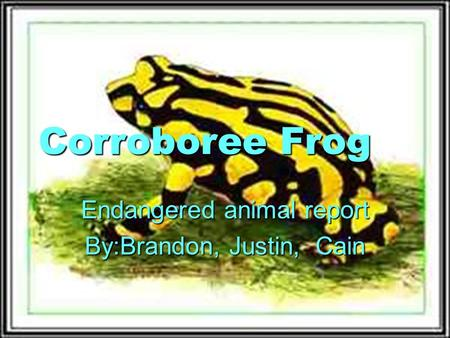 Corroboree Frog Endangered animal report By:Brandon, Justin, Cain.