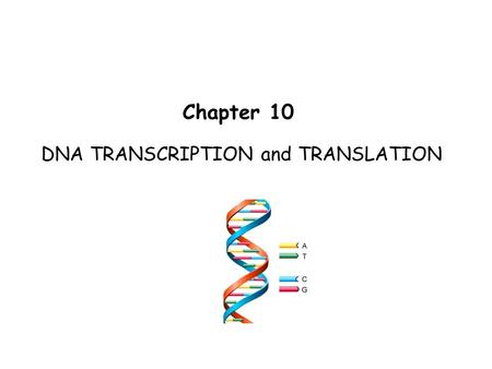 DNA TRANSCRIPTION and TRANSLATION