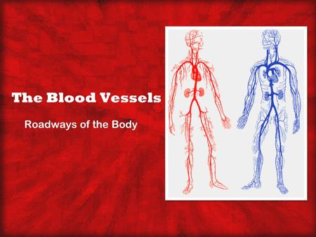 The Blood Vessels Roadways of the Body.