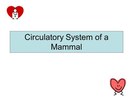 Circulatory System of a Mammal