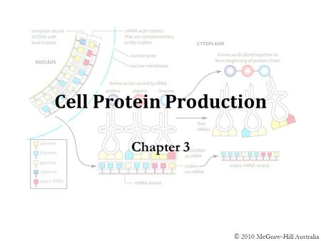 Cell Protein Production