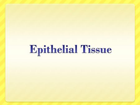 Epithelia Epithelia are tissues consisting of closely apposed cells with very little intercellular substances. They Epithelia are avascular but all epithelia.