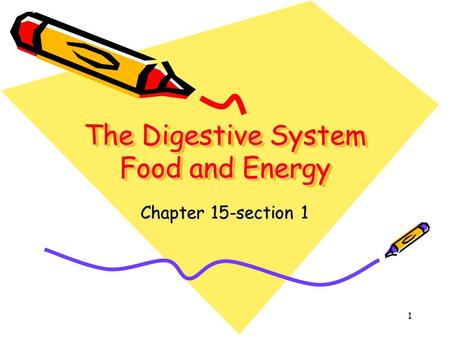 The Digestive System Food and Energy