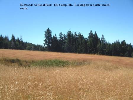 Redwoods National Park. Elk Camp Site. Looking from north toward south.