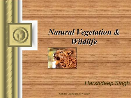 Natural Vegetation & Wildlife