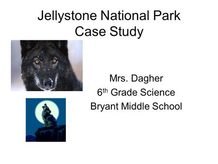 Jellystone National Park Case Study Mrs. Dagher 6 th Grade Science Bryant Middle School.
