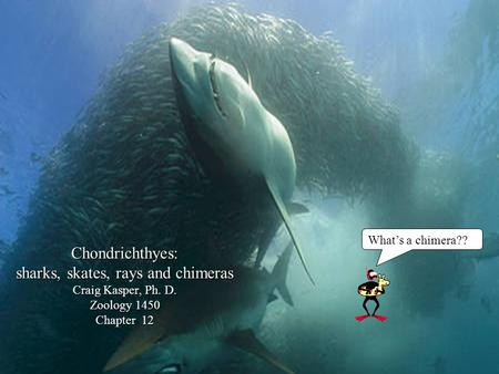 Chondrichthyes: sharks, skates, rays and chimeras Craig Kasper, Ph. D