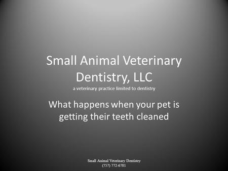 Small Animal Veterinary Dentistry, LLC a veterinary practice limited to dentistry What happens when your pet is getting their teeth cleaned Small Animal.