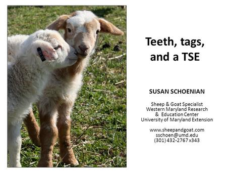 Teeth, tags, and a TSE SUSAN SCHOENIAN Sheep & Goat Specialist Western Maryland Research & Education Center University of Maryland Extension www.sheepandgoat.com.