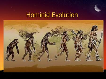 Hominid Evolution.