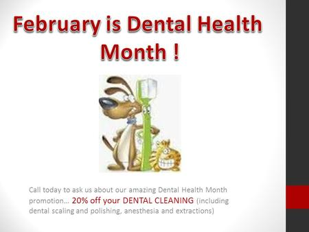 Call today to ask us about our amazing Dental Health Month promotion… 20% off your DENTAL CLEANING (including dental scaling and polishing, anesthesia.