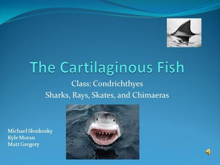 Class: Condrichthyes Sharks, Rays, Skates, and Chimaeras Michael Slonkosky Kyle Moran Matt Gregory.