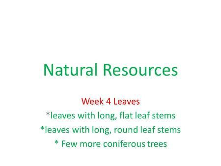 Natural Resources Week 4 Leaves *leaves with long, flat leaf stems *leaves with long, round leaf stems * Few more coniferous trees.
