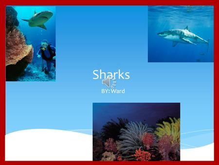 Sharks BY: Ward B asking Sharks are the second-largest sharks in the world! They eat plankton, larvae, and other small fish. Basking Sharks can grow.