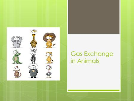 Gas Exchange in Animals. Respiration All living things carry out respiration.