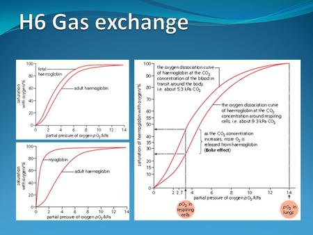 H6 Gas exchange.