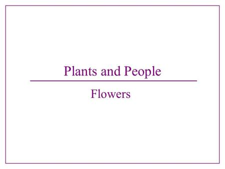 Plants and People Flowers.