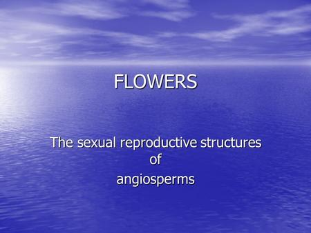 The sexual reproductive structures of angiosperms