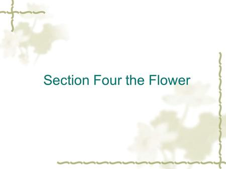 Section Four the Flower