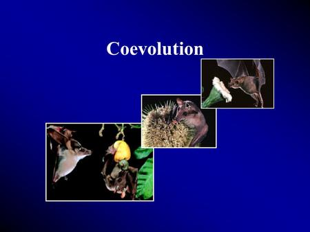 Coevolution. Between plants and animals A relationship develops between two organisms such that, as they interact with each other over time, each exerts.