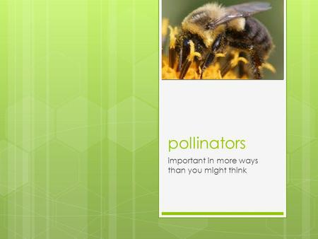 Pollinators important in more ways than you might think.
