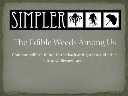 Common edibles found in the backyard garden and other Not so wilderness areas.