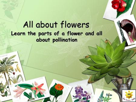 Learn the parts of a flower and all about pollination