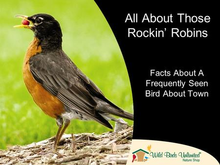 Facts About A Frequently Seen Bird About Town All About Those Rockin Robins.
