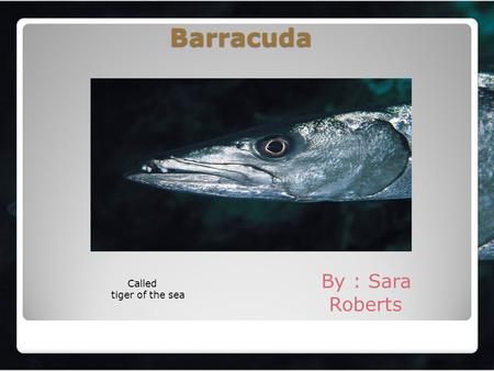 Barracuda By : Sara Roberts Called tiger of the sea.