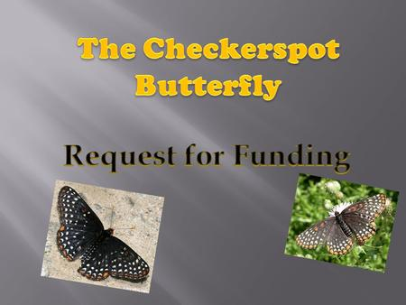 The Checkerspot butterfly Named the official Maryland State insect in 1973 Their family and subfamily is Nymphalinae Their Eggs are laid in groups of.