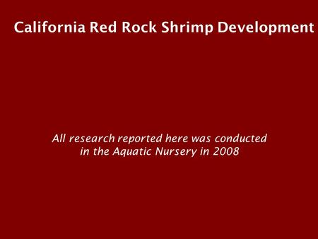 California Red Rock Shrimp Development All research reported here was conducted in the Aquatic Nursery in 2008.