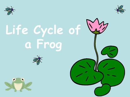 Life Cycle of a Frog.