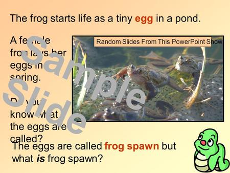 The frog starts life as a tiny egg in a pond. A female frog lays her eggs in spring. Do you know what the eggs are called? The eggs are called frog spawn.
